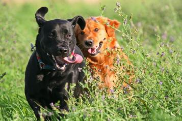 estate planning for pets